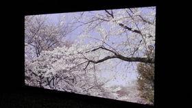 Hands on: Panasonic 145-inch 8K Super Hi Vision television review