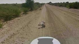 Google: We didn't kill the burro in Botswana