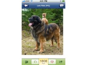 Digg's native iPhone App arrives
